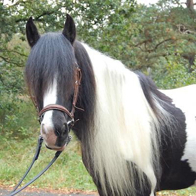 paard_bandit