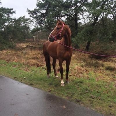 paard_evita