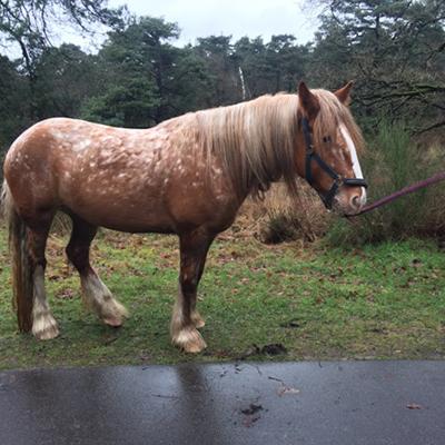 paard_ide