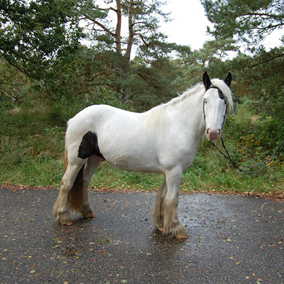 paard_kildare