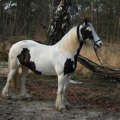 paard_morag