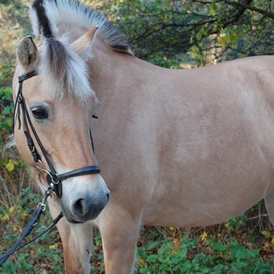 paard_neeltje