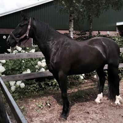 paard_ollie
