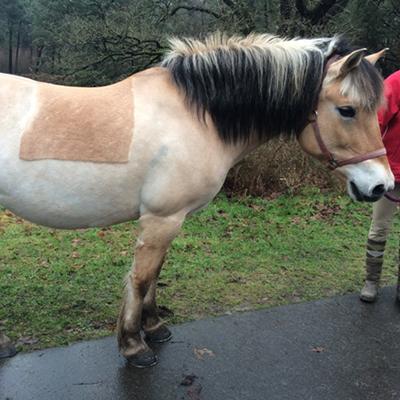 paard_yjelle