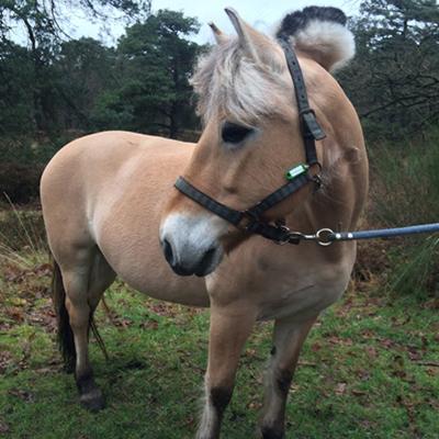 paard_yvonne